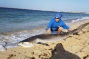 Pesca agli squali a Maio C&R