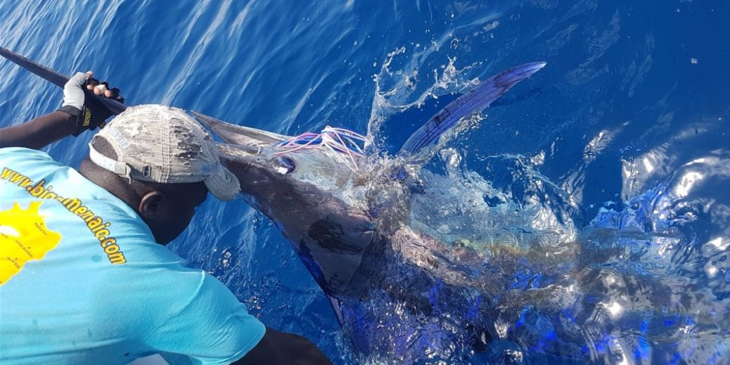 Pesca al Marlin Big Game Maio