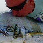 Pesca alla lampuga Big Game Maio