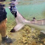 Rilascio di uno squalo Big Game Maio