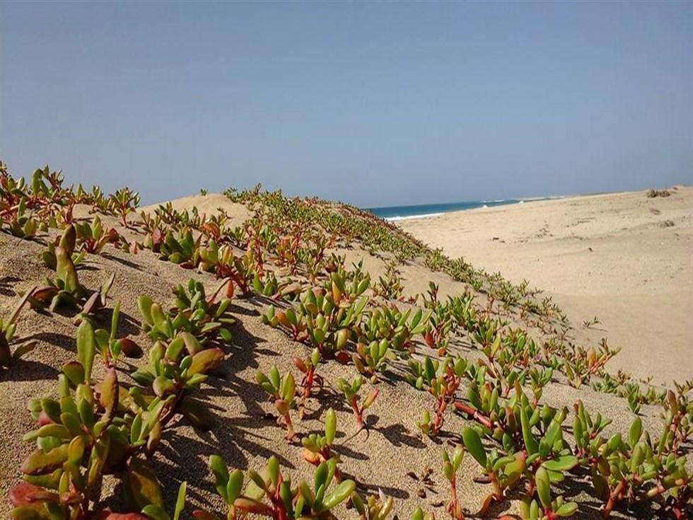 Covid-19 aggiornamento collegamenti a Capo Verde